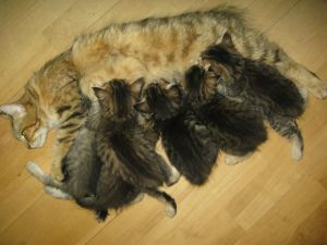 Juno and kittens 25-08-09
