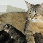 Emmy and kittens 21-05-11
