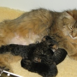 Pippa and kittens
